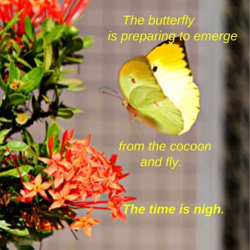 The butterfly is preparing to emerge from the cocoon and fly. The time is nigh.