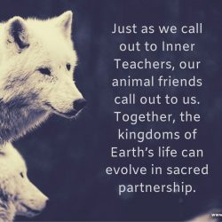 Animal friends call to us sacred partnership