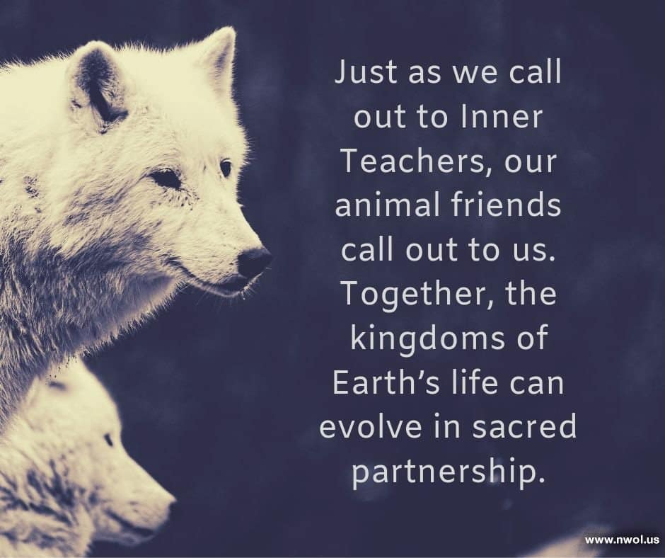 Just as we call out to Inner Teachers, our animal friends call out to us. Together, the kingdoms of Earth's life can evolve in sacred partnership.