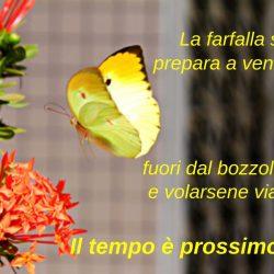 La farfalla si prepara a venir