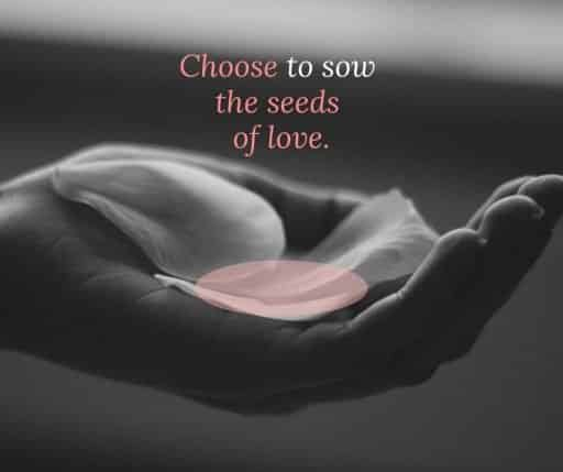 Choose to sow the seeds of love.