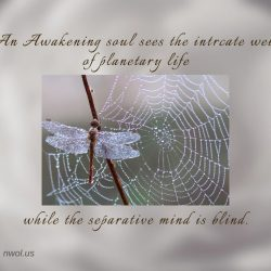 An awakening soul sees the intricate web of planetary life