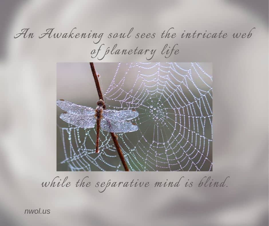 An awakening soul sees the intricate web of planetary life while the separative mind is blind.