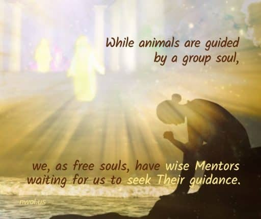 While animals are guided by a group soul, we, as free souls, have wise Mentors waiting for us to seek Their guidance.