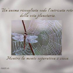 Un anima risvegliata vede L intricata rete