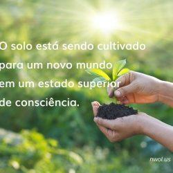 O solo esta sendo cultivado