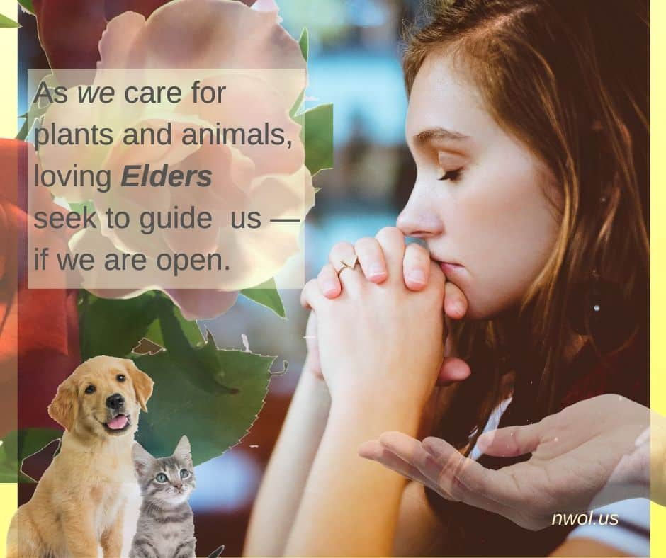 As we care for plants and animals, loving Elders seek to guide us—if we are open.