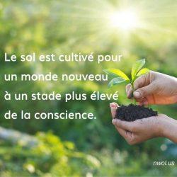 Le sol est cultive pour