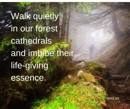 Walk quietly in our forest cathedrals and imbibe their life-giving essence.