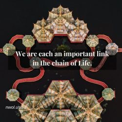 We are each an important link in the chain of life