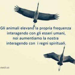 Gli animali elevano la propria frequenza