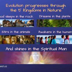 Evolution progresses through the 5 Kingdoms in Nature