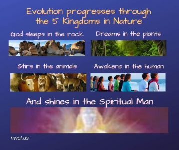 Evolution progresses through the 5 Kingdoms in Nature