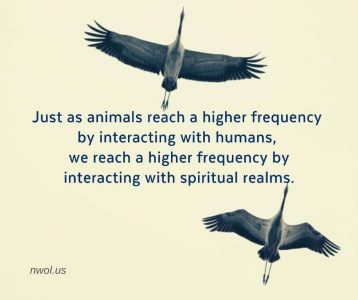 Just as animals reach a higher frequency