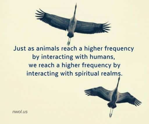 Just as animals reach a higher frequency by interacting with humans, we reach a higher frequency by interacting with spiritual realms.