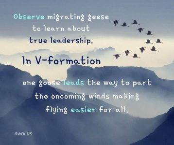 Observe migrating geese to learn about true leadership