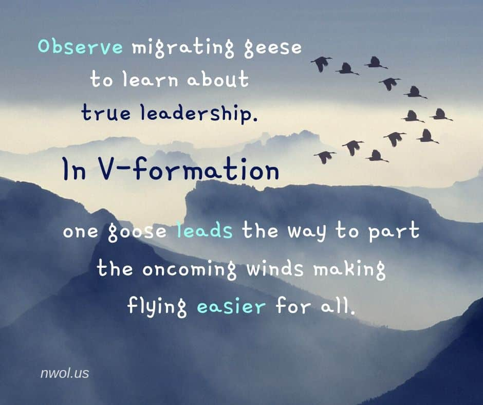 Observe migrating geese to learn about true leadership. In V-formation one bird leads the way to part the oncoming winds, making flying easier for all.