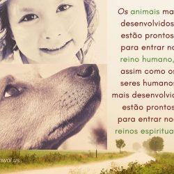 Os animais mais