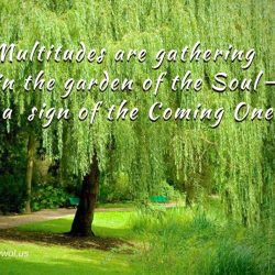 Multitudes are gathering in the garden of the Soul