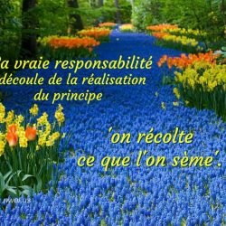 La vraie responsabilite