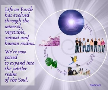 Life on Earth has evolved through the mineral vegetable animal and human realms