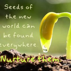 Seeds of the new world can be found everywhere