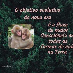 O objetivo evolutivo