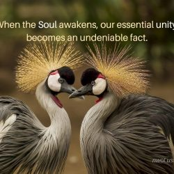 When the Soul awakens our essential unity becomes one