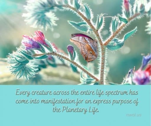 Every creature across the entire spectrum of life has come into manifestation for an express purpose of the Planetary Life.