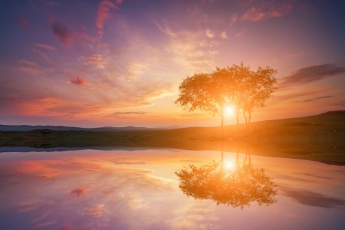 Reflection of the sunset with lonely tree in the lake