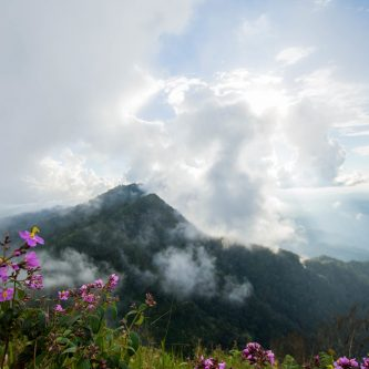 beautiful pink flower on mountain and mist on top mountain.